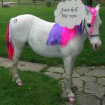 jenny's got a pony