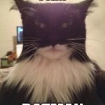 Dark Cat Rising